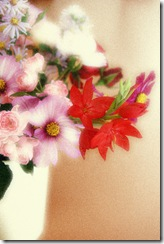 Mitty's flowers 20