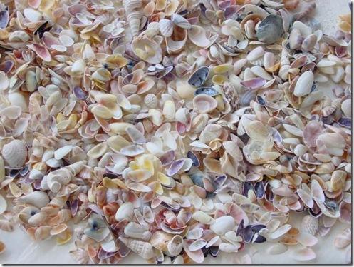 seashells8