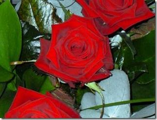 flowers 006 copy