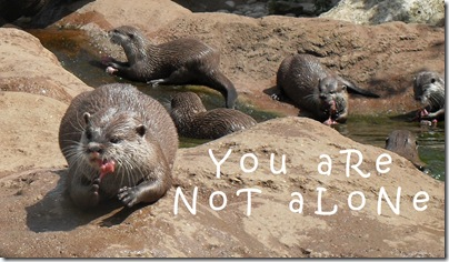 otter - you are not alone