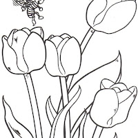 flores_2_2.jpg