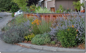100703_frontyard3