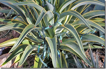 101123_agave_des_lights