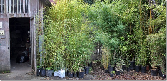 101130_bamboosourcery_plants_for_pickup