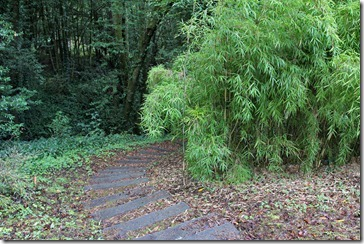 101130_bamboosourcery_Creek-Trail-with-YUANP