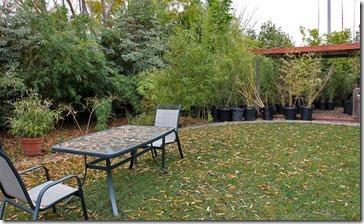 101211_Madman-Bamboo-backyard