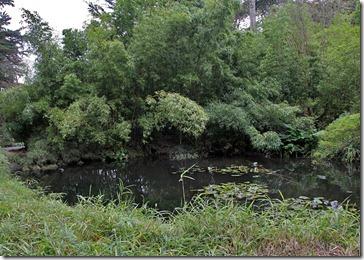 101228_SFBG_bamboo-pond_01