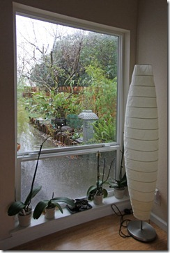 110217_rain_window