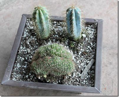 110210_succulent_bowl2