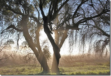 110220_oak_tree_at_sunrise