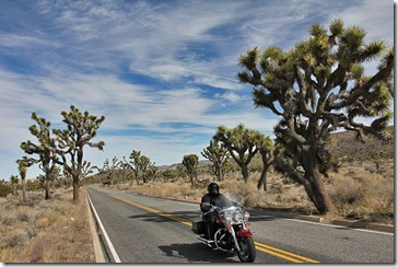 110221_joshua_tree_np_motorcycle_rider