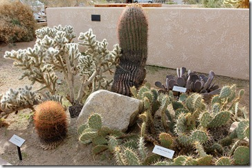 110221_joshua_tree_np_visitorcenter_cactus_garden