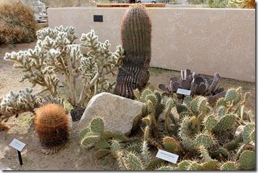 110221_joshua_tree_np_visitorcenter_cactus_garden