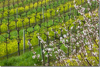 100225_napa_spring_8280_sm