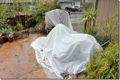 110320_rain_front_yard_succ