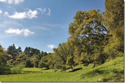110410_meadow