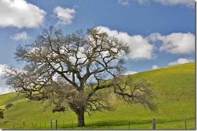 110410_oaktree