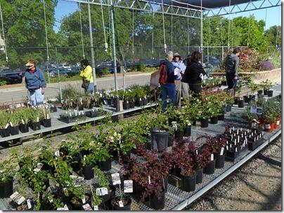 110430_UCD_Arboretum_plant_sale_04