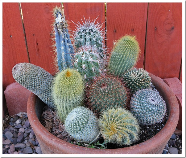 110220_cactus_bowl