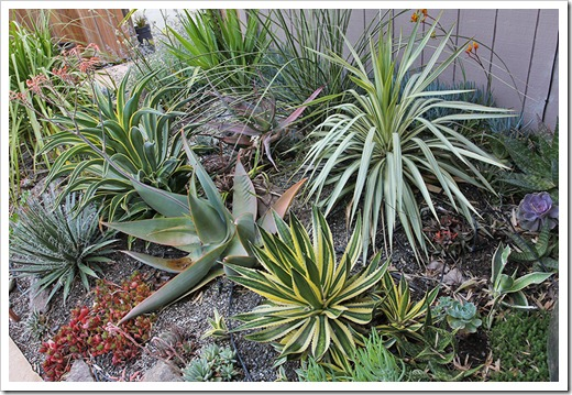 110519_succulent_bed