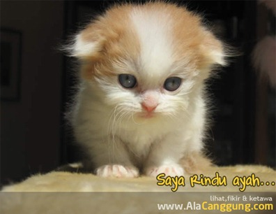 kucing-sedih