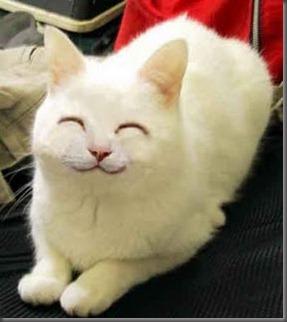 cat_smile