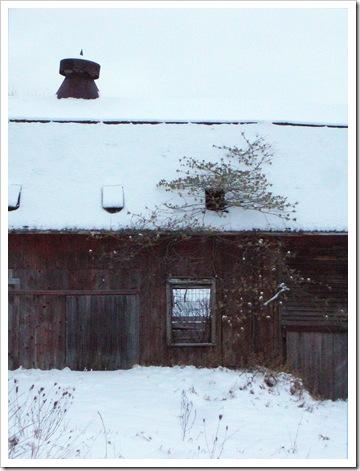 snowbarnflower