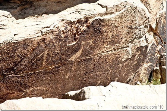 Petrified Forest-043