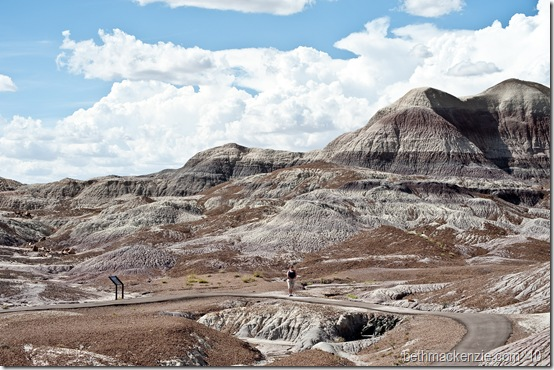 Petrified Forest-098