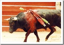 touradas touro ferido