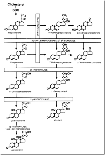 17 ketosteroids fractionation
