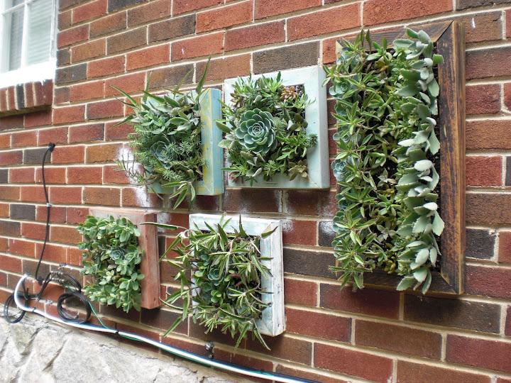 Vertical Gardens Southeast Succulents