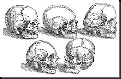 five-skulls