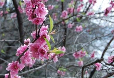 Blossom_160809