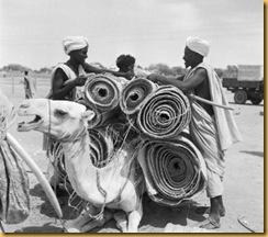 a-camels-burden