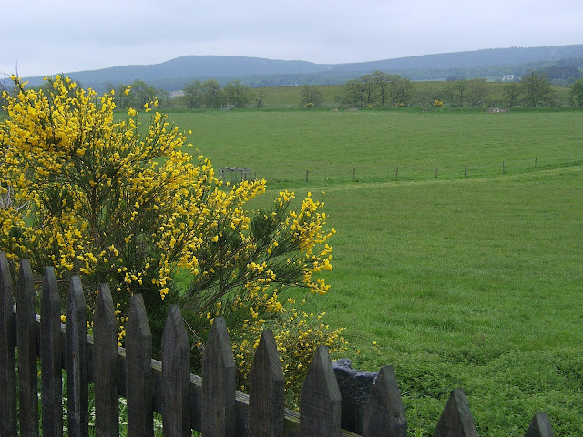 Scotland - Yellow flowers and green field next to the train track