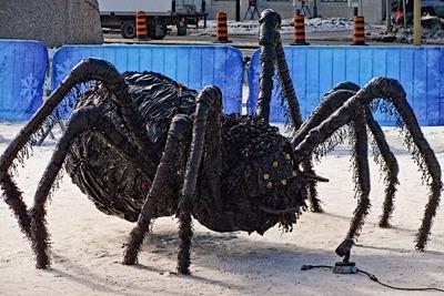 DSCF3474_spider