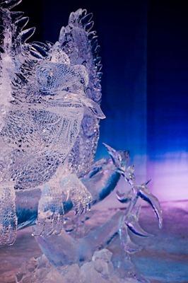 DSC_0772_ice