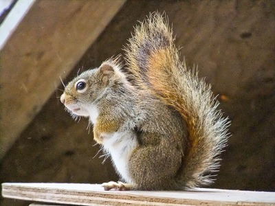 DSCF2082_squirrel[1]