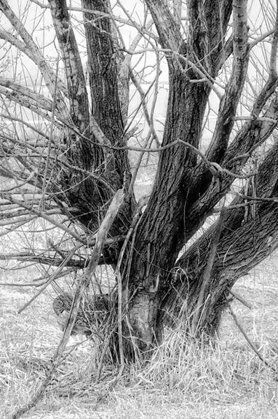 DSCF2165_tree[1]