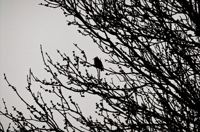 DSCF2197_bird[1]