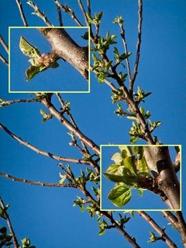 DSCF4309_f70_tree_rennie_crops[1]