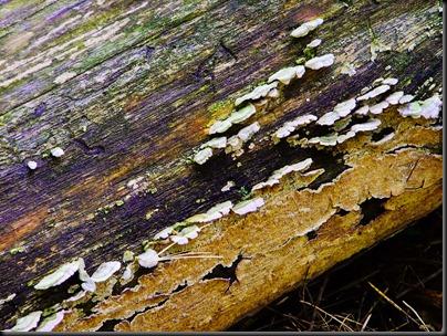 DSCF0070_fungus[1]