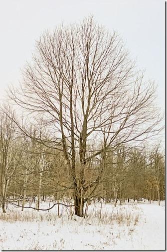 DSCF2362_tree