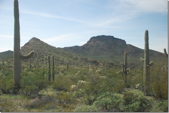 03-05-19 Ajo Mountain Loop - OPCNM 074
