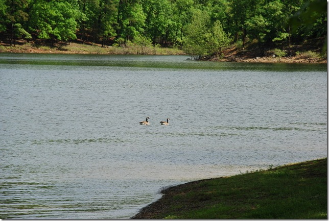 04-24-10 Lake Ouachita Crystal Springs 002