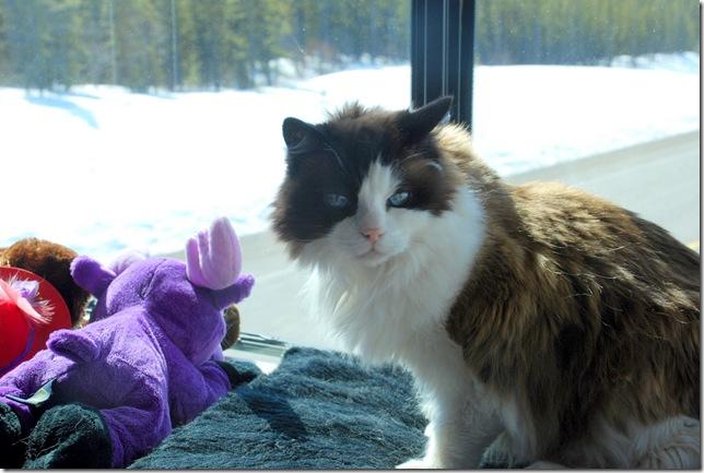 04-24-09 Alaskan Highway - Yukon 023