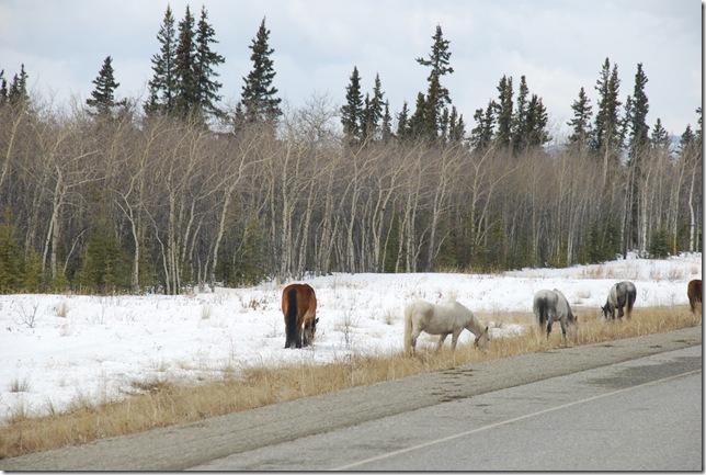 04-24-09  B Alaskan Highway - Yukon 022