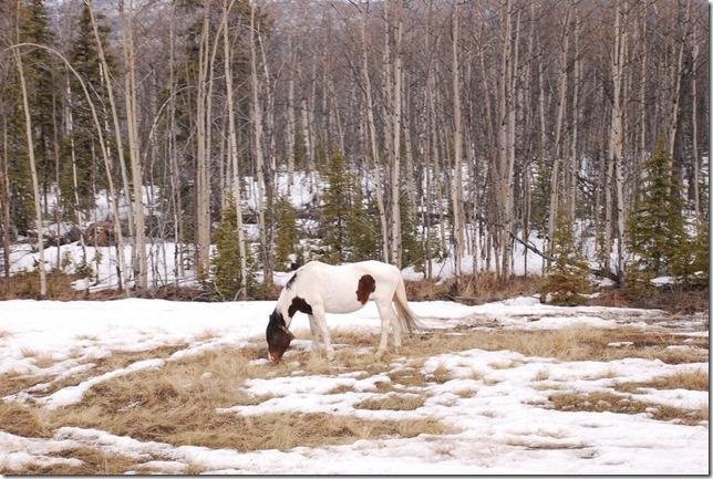 04-24-09  B Alaskan Highway - Yukon 023