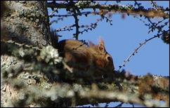 04 02 10_0783_edited-squirrel